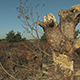 Tree Stump in Dry Moorland - VideoHive Item for Sale