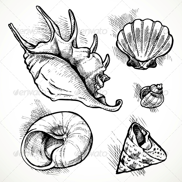 Set of Shell Sketches - Organic Objects Objects