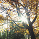 Sun Through Golden Autumn Leaves - VideoHive Item for Sale