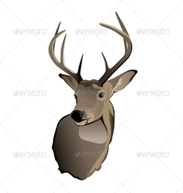 Vector Trophy Whitetail Deer Buck - Animals Characters