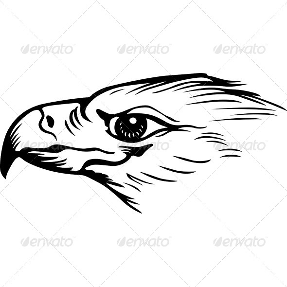 Eagle - Animals Characters