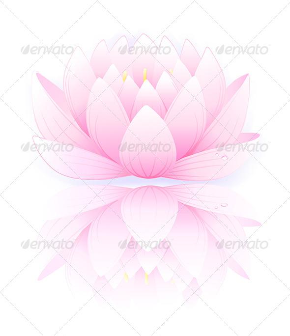 Pink Lotus - Flowers & Plants Nature
