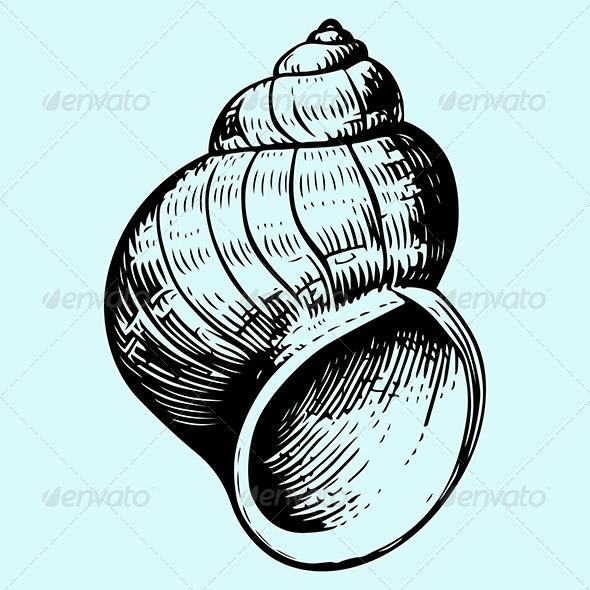 Seashell - Organic Objects Objects