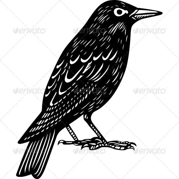 Blackbird - Animals Characters