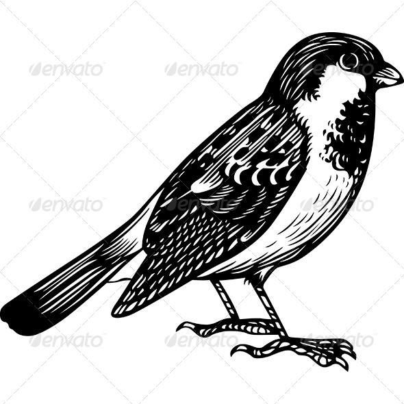 Sparrow. - Animals Characters