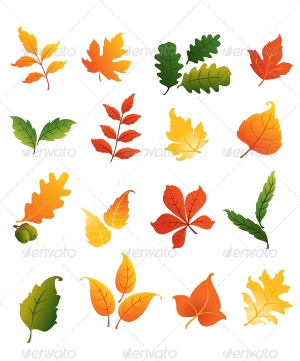 Colourful Autumnal Leaves Set - Seasons Nature