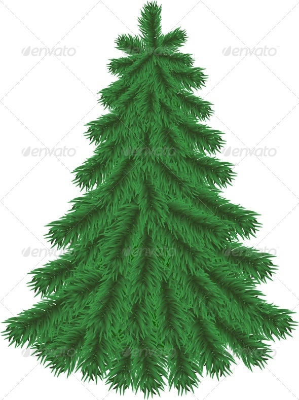 Fir Tree without Christmas Decorations - Christmas Seasons/Holidays