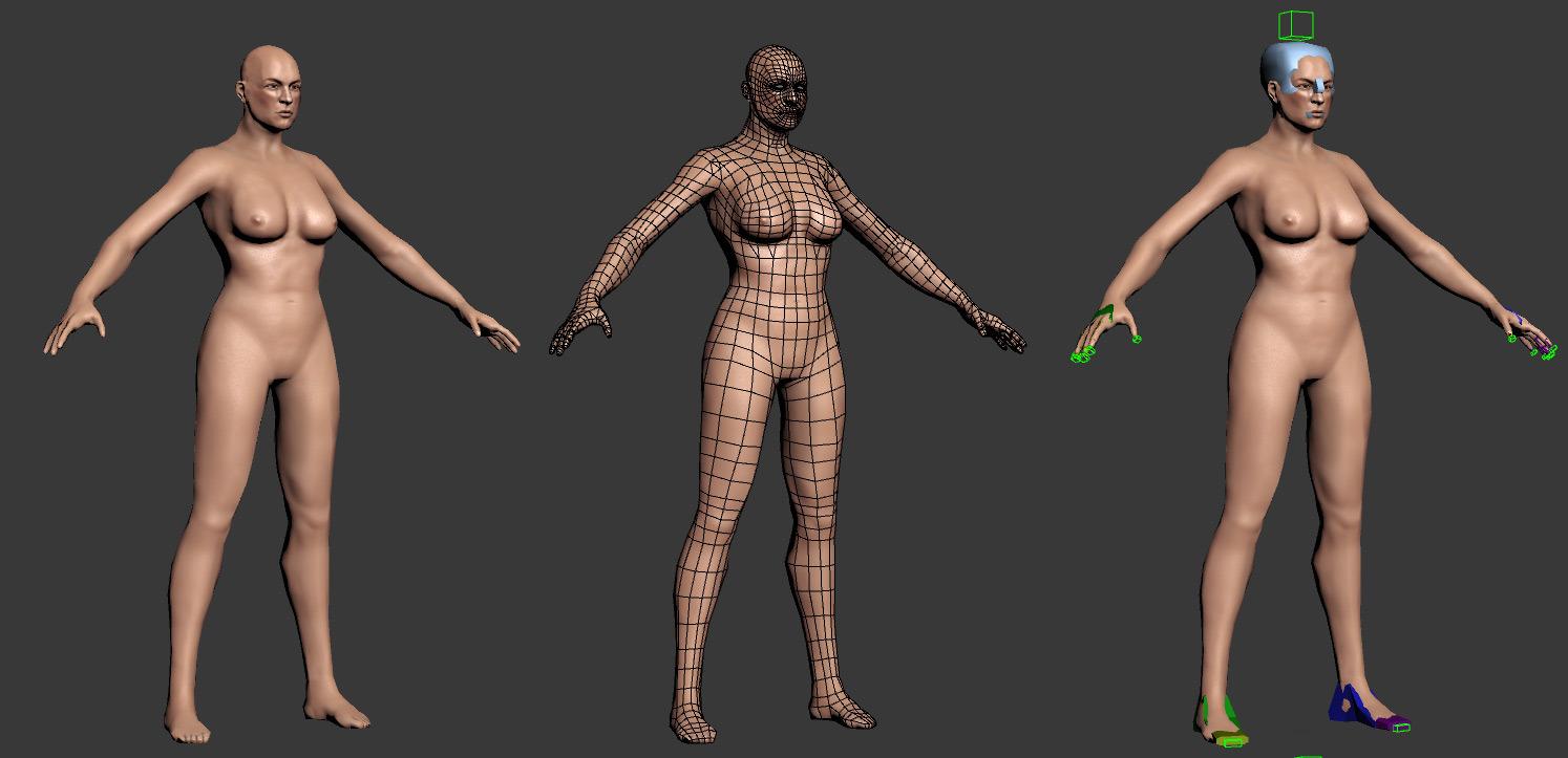 Human - Male and Female base mesh - rigged
