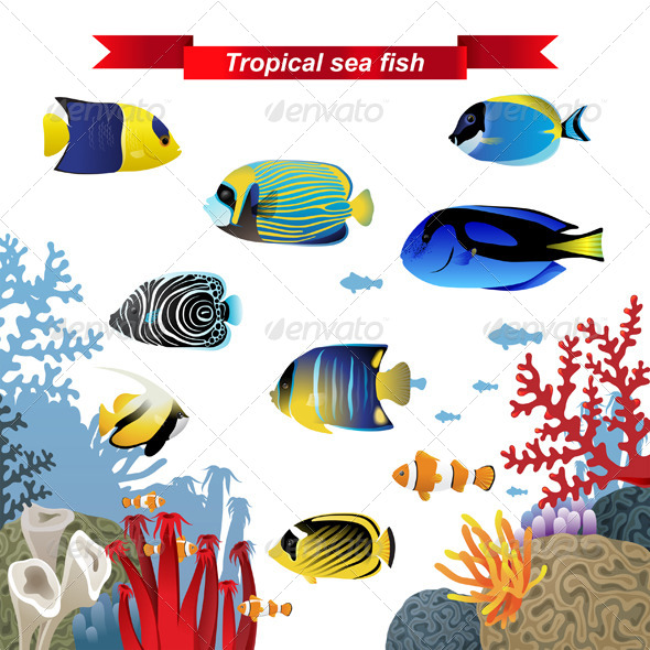 Coral Reef Fishes - Miscellaneous Vectors