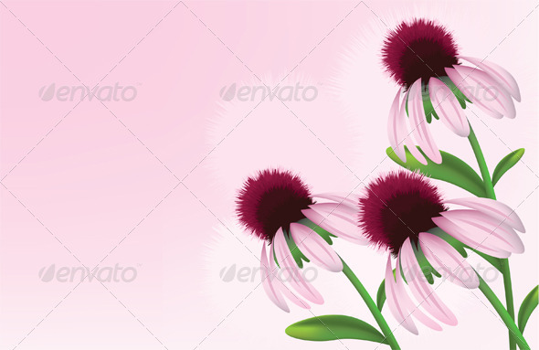 Pink Daisys - Flowers & Plants Nature