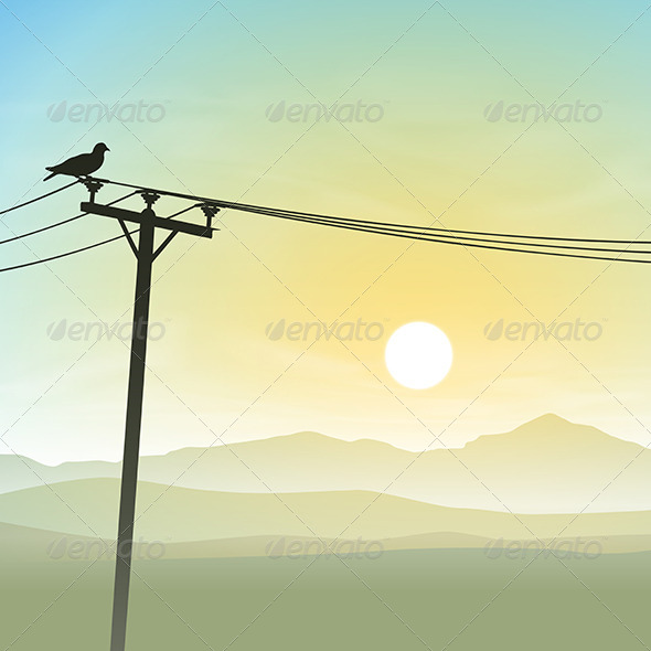 Bird on Telephone Lines - Landscapes Nature