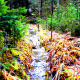 Autumn Forest Stream In Ural 1 - VideoHive Item for Sale