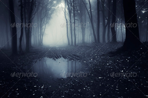 Dark forest with fog and pond - Stock Photo - Images