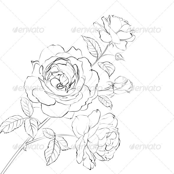 Contour of Rose - Flowers & Plants Nature