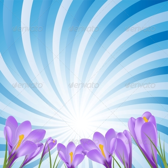 Vector Illustration Crocus Flower Background - Flowers & Plants Nature