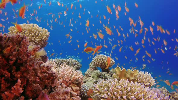 Underwater Colorful Tropical Fishes And Beautiful Corals By Nemo Dahab