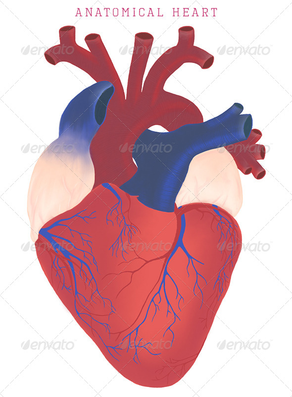 anatomical heart by lunarhaze | graphicriver, Human body