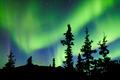 Yukon taiga spruce Northern Lights Aurora borealis - PhotoDune Item for Sale