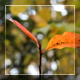Autumn Leaves 4 in 1 - VideoHive Item for Sale