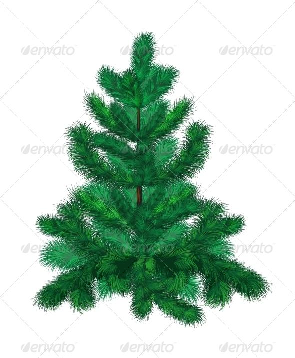 Green Fir Tree - Christmas Seasons/Holidays
