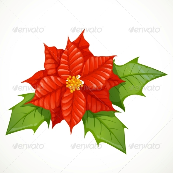 Holly Flower Isolated  - Christmas Seasons/Holidays