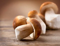 Mushroom Boletus over Wooden Background. Autumn Cep Mushrooms - PhotoDune Item for Sale