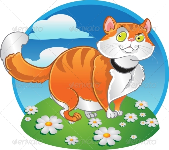 Orange Fat Cat on the Color Background - Animals Characters