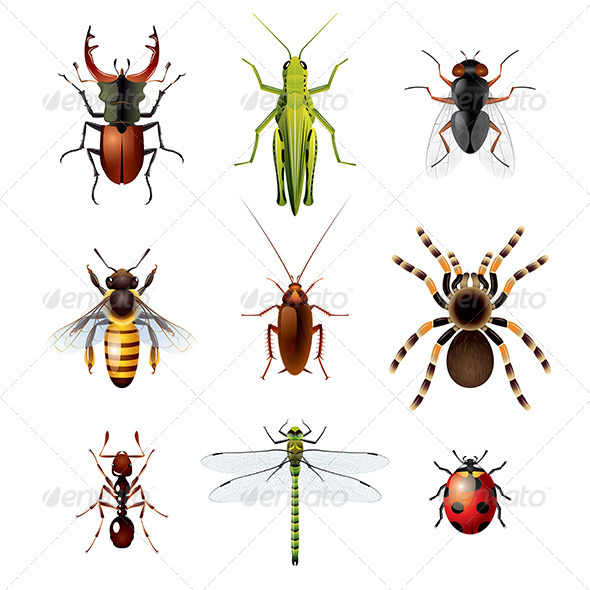 Set of Insects on White Background - Animals Characters