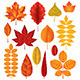 Autumn Leaves Vector Set - GraphicRiver Item for Sale