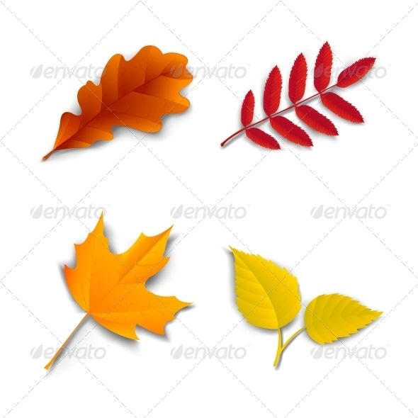 Autumn Oak Maple Ash Birch Leaves - Decorative Symbols Decorative