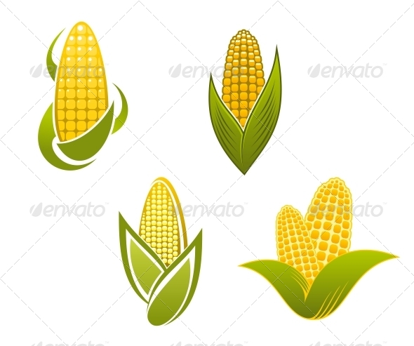 Yellow Corn Icons and Symbols - Food Objects