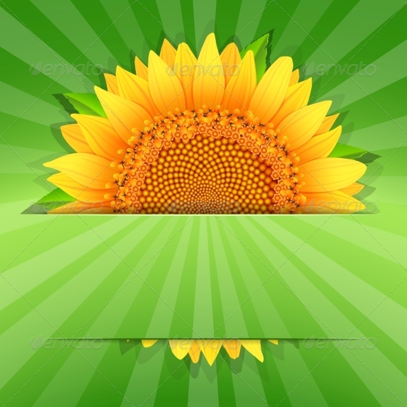 Summer Sunflower Poster Template - Borders Decorative