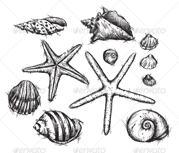 Selection of Sea Shells Drawings - Organic Objects Objects