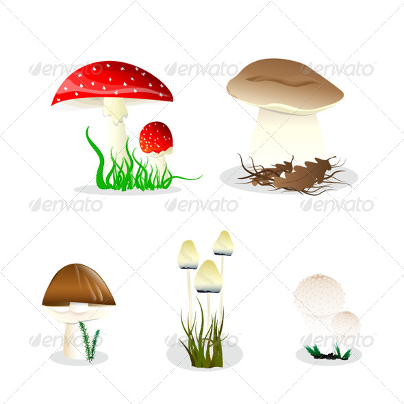 Set of the Mushrooms - Nature Conceptual