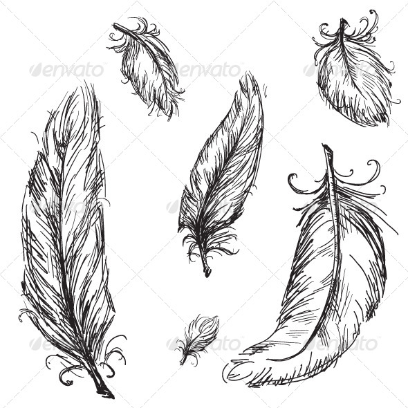 Collection of Feathers - Decorative Vectors