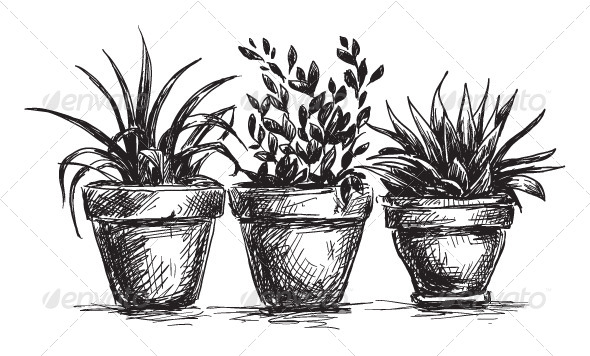 house plants drawing. set of flower pots flowers u0026 plants nature house drawing