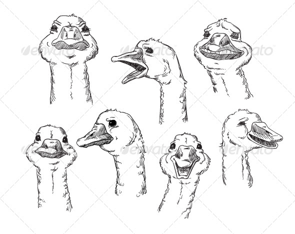 goose with Different Facial Expressions of Human - Animals Characters