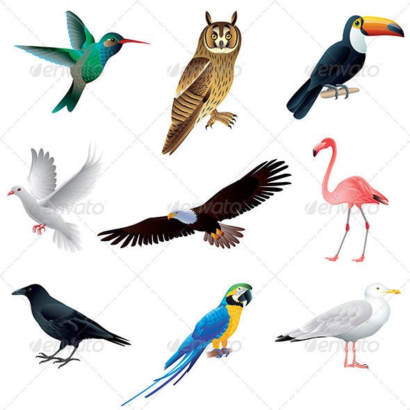 Birds Isolated on White Vector Set - Animals Characters