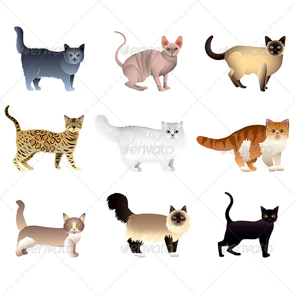 Cats Isolated on White Vector Set - Animals Characters