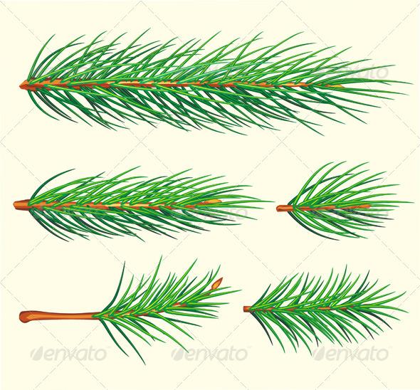 Pine Branches - Christmas Seasons/Holidays
