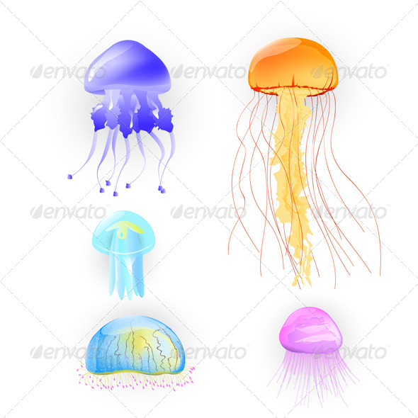 Illustration of Different Jellyfish - Animals Characters