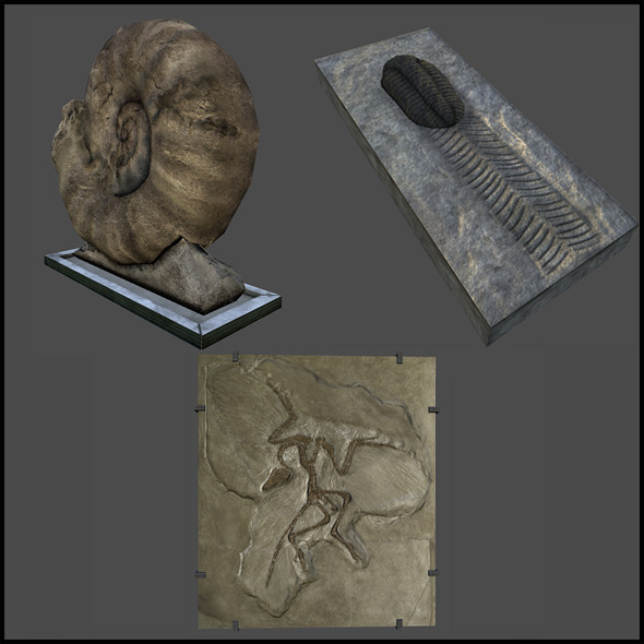 Rock Fossils - 3DOcean Item for Sale