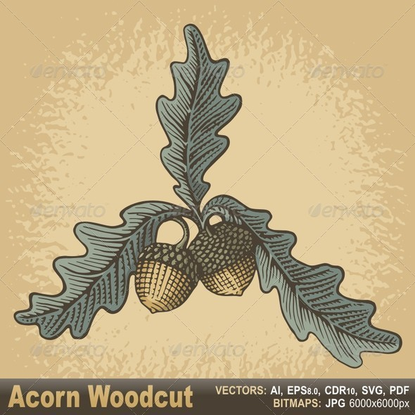 Acorn Woodcut - Flowers & Plants Nature