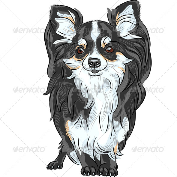 Vector Sketch Dog Chihuahua Breed Smiling - Animals Characters