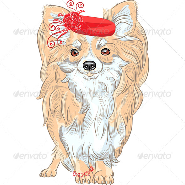 Fashion Dog Chihuahua Breed Smiling - Animals Characters