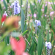 Many Lavender Flowers Around The River - VideoHive Item for Sale