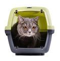 British cat - PhotoDune Item for Sale