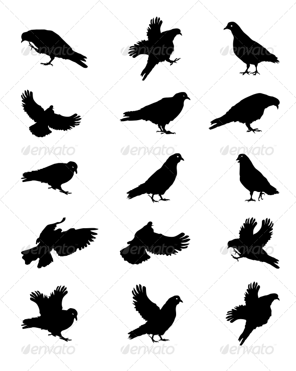 Silhouette of Pigeons Isolated on White Vector Ill - Religion Conceptual