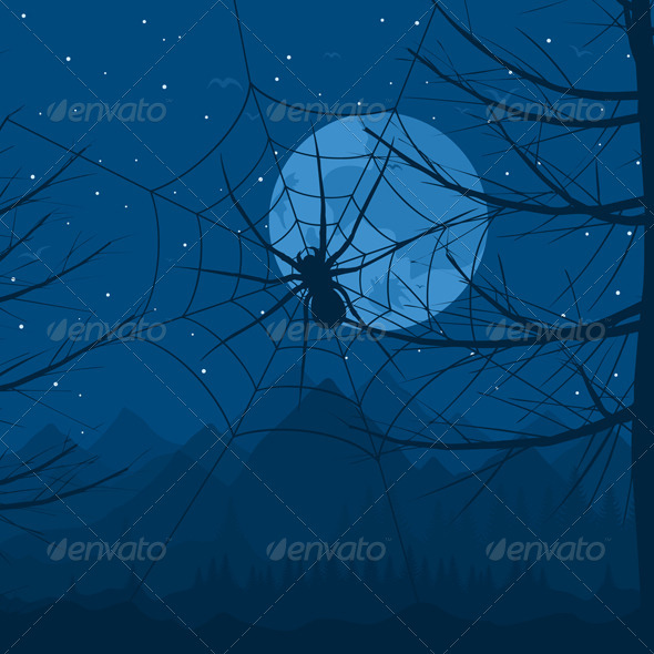 Spider at night - Landscapes Nature