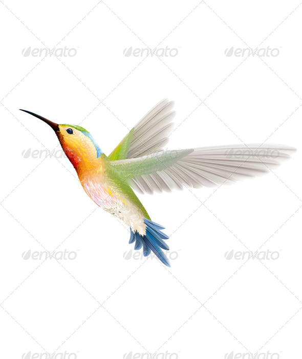 Hummingbird  - Animals Characters